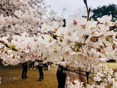 お花見2019 (1).jpg