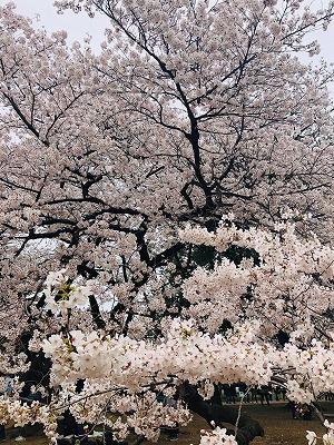 お花見2019 (2).jpg