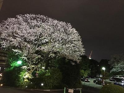 Bungakuza8.jpg