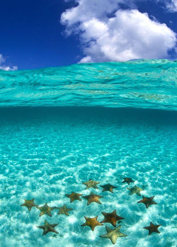 海とヒトデ.jpg
